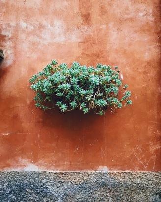 in Tuscania