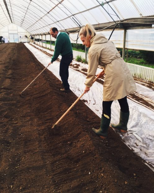 preparing the greenhouse for strawberries