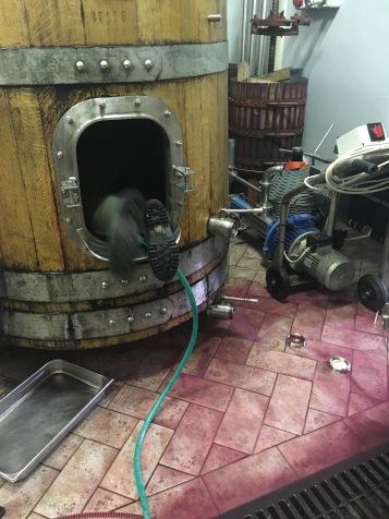 luke diving in the oak barrel to clean it