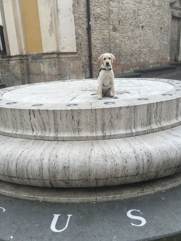 Bianca sitting on the geographical center of Italy