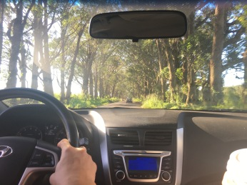Driving on Maluhia Tree Tunnel road