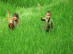 Kids in the rice fields