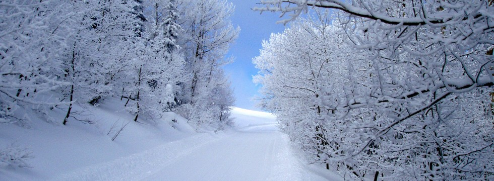 trail_02-980x360